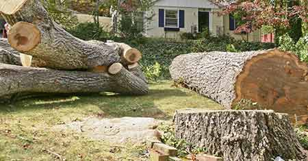 Express Tree Service - Tree Removal - Cleveland, Ohio