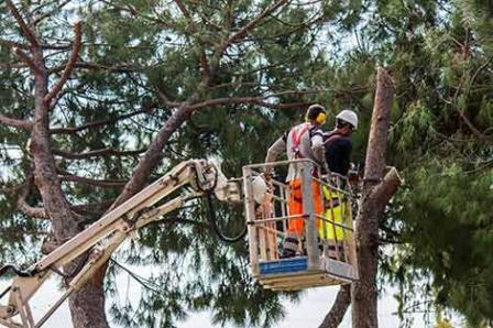 R & J Tree Service
