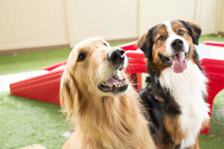 Camp Bow Wow – Bedford Heights