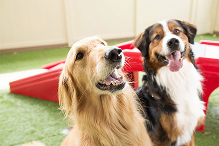 Camp Bow Wow - Bedford Heights, Ohio - Doggy Day Care, Boarding, Training and Grooming. Ensuring Your Furry Family Member is in the Best Hands.