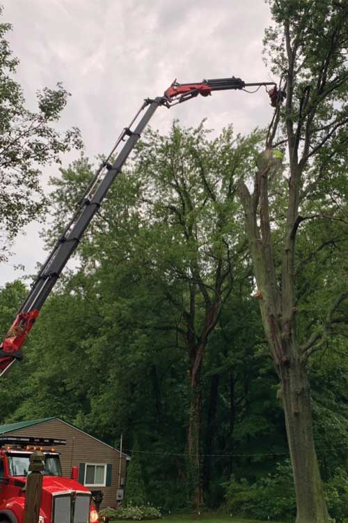 Highpoint Tree Service - Cleveland, Ohio - Tree and Stump Removal, Tree Pruning and Cabling, Fertilization, Firewood and Mulch for Sale