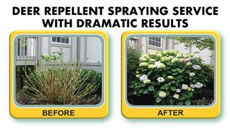 En Garde Deer Defense - Brecksville, Ohio - Deer repellent spraying service with dramatic results - Stop deer damage